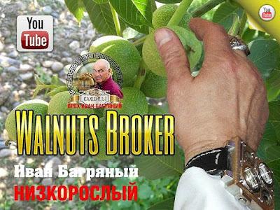 """Walnut """"Ivan Bagryany"""", 0985674877, 0957351986, Walnuts Broker"""