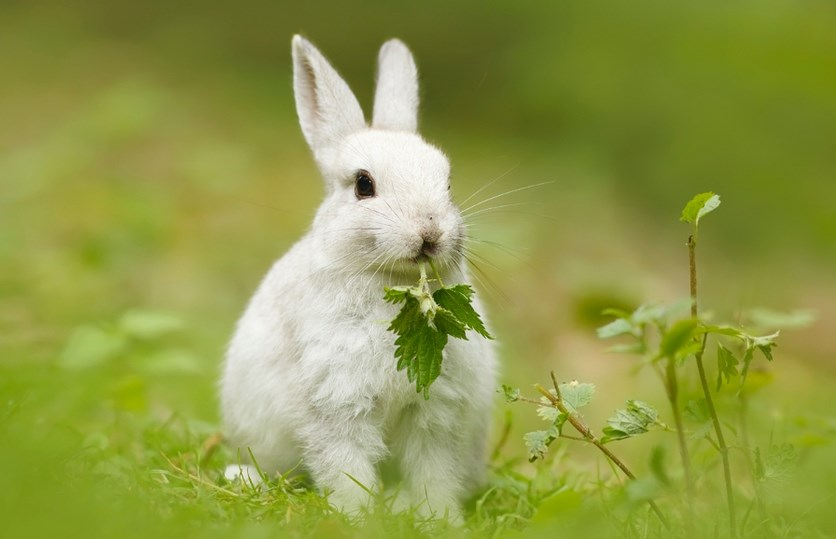 Foto dan gambar imut kelinci lucu lucu ternak kelinci hias kelinci hias kelinci merawat kelinci kartun