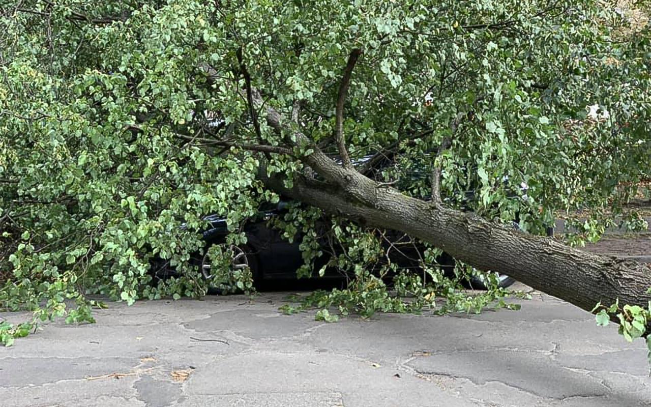 Vējš nogāž koku uz vieglo automašīnu Teikā