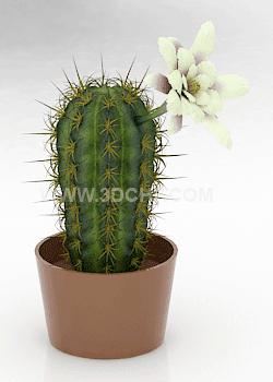free 3dcactus model flower