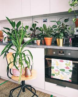Skrzydłokwiat w kuchni
