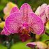 Cum abordăm tijele orhideelor după înflorire