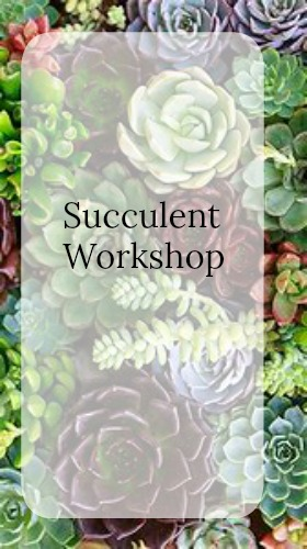 Succulent Workshop over on Fizzy Party