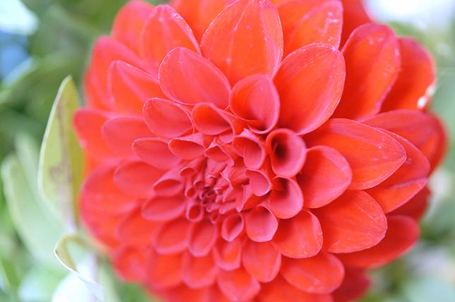 Ynas Design Blog, Flower Friday, Dahlien