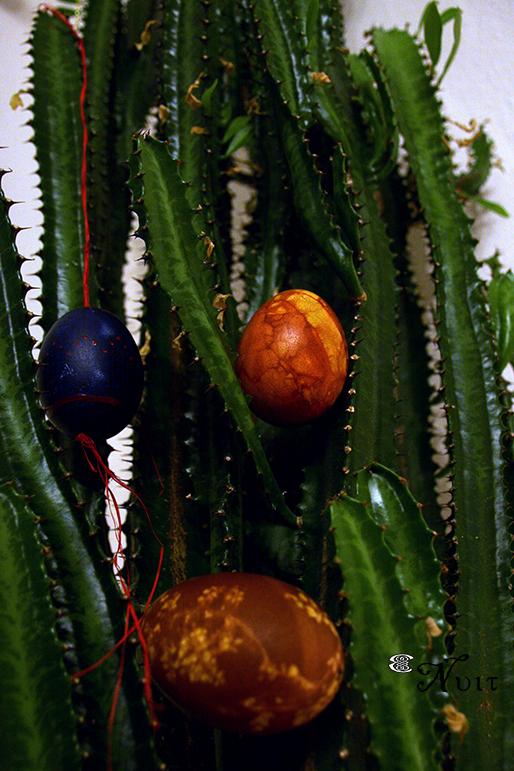 verstecken inhalt kaktus