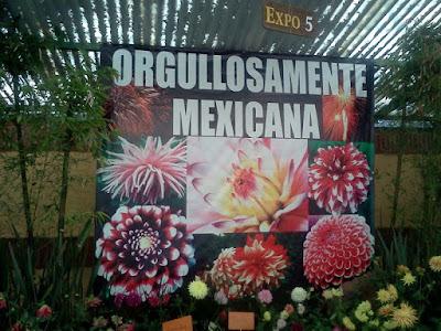 El cuexcomate exposici n de dalias en los viveros de coyoac n for Viveros en oaxaca