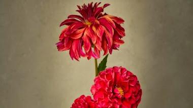 Foto del día: Vase with Dahlias, por Sibylle Pietrek