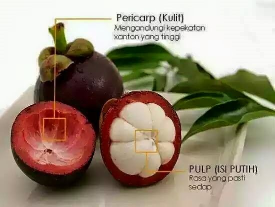 Sudah Tau manfaat buah manggis untuk Kesehatan?