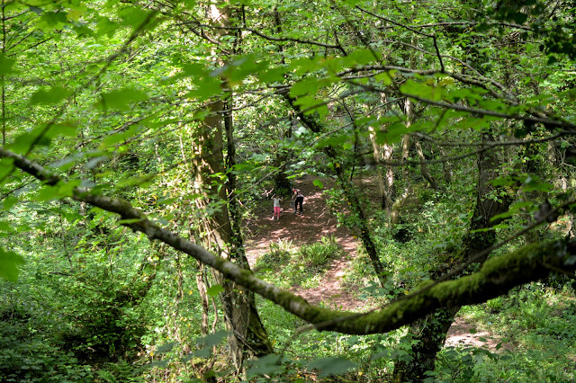 Castle Pill Woods, Milford Haven,  Pembrokeshire