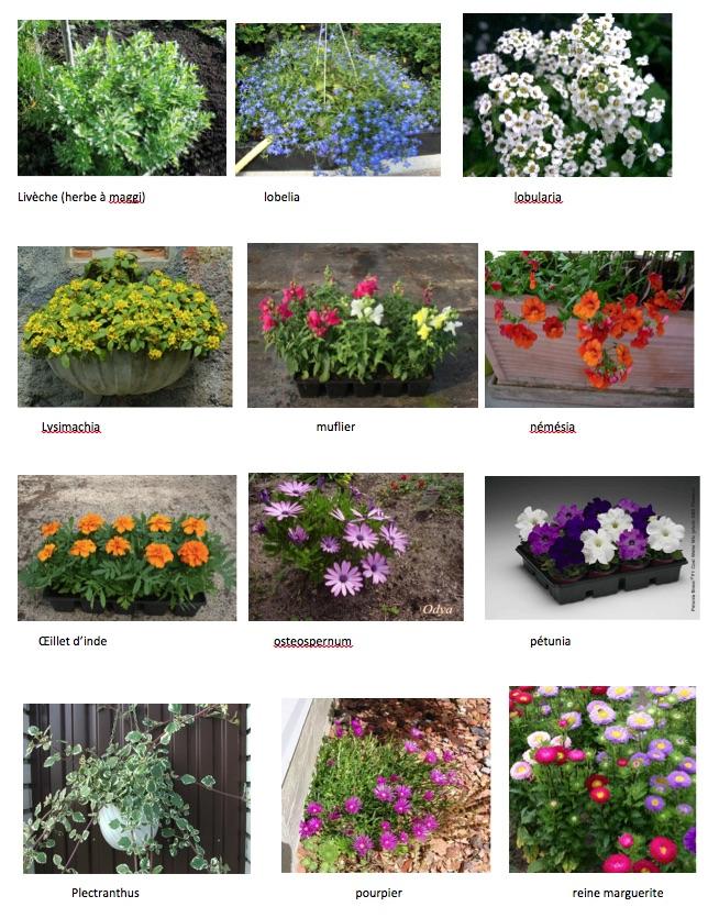 Ecole g rard cl ment vente de plantes for Vente de plantes