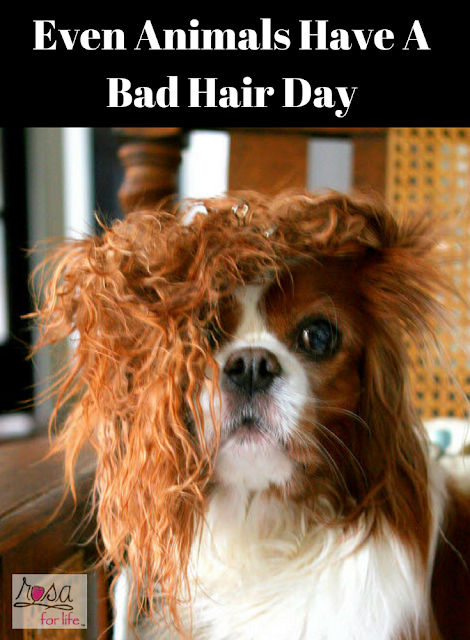 http://www.rosaforlife.com/2018/04/even-animals-have-bad-hair-day.html