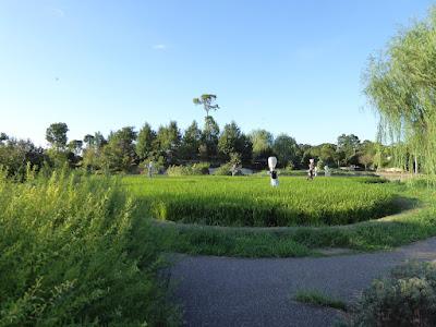 山田池公園 実りの里 棚田