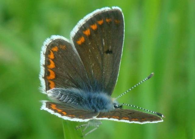Для чего бахрома на крыльях бабочки