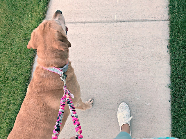 Only Leash review, Anti pull dog leash, How to train your dog to walk close to you, How to train your dog to walk on a leash, How to use the only leash