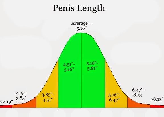 Penis sex size average