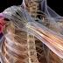 Ποιος είπε ότι δε γίνεται; Κι όμως…Σπιτική θεραπεία για τους πόνους των μυών και των οστών σας