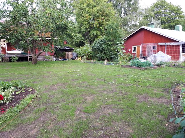 nurmikon perustaminen uusi nurmikko