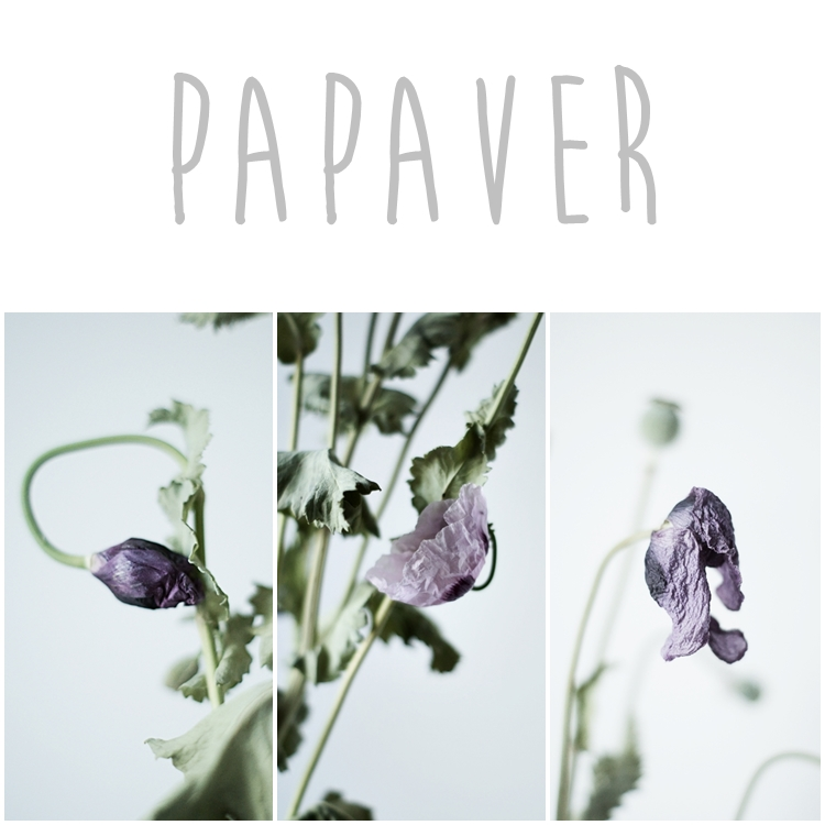 Collage Papaver { by it's me! }