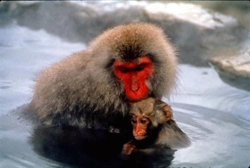 Japan Tours Travel Honeymoon Onesen Monkey