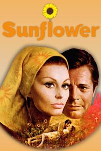 Watch Sunflower Online Free in HD