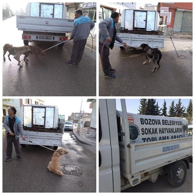Bozova'da başıboş köpekler toplandı