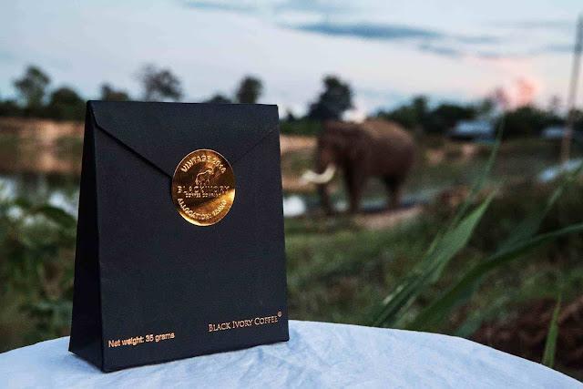 Fakta Kopi Kotoran Gajah Yang Harus Kamu Ketahui