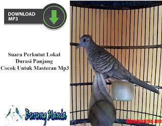 Suara Perkutut Lokal Durasi Panjang Cocok Untuk Masteran Mp3