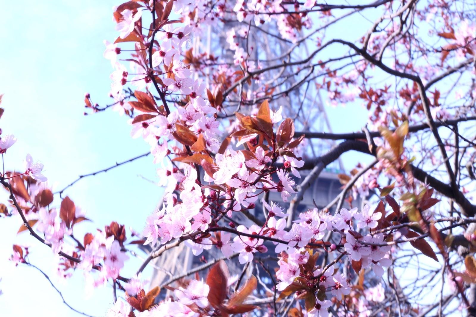 5 petits plaisirs faire au printemps paris marshmallowor l d - Greffe du cerisier au printemps ...