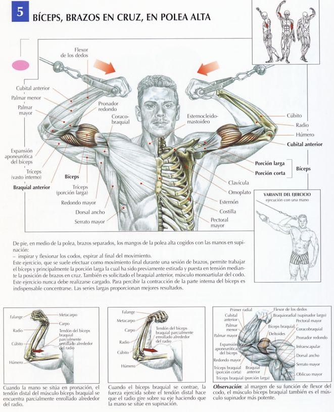 Los mejores ejercicios de biceps para volumen