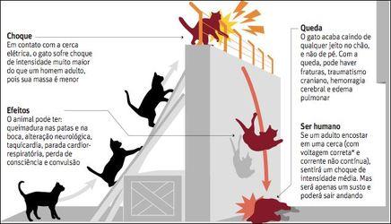 A cerca eletrica pode matar gatos conhe a os fatos for Cerca b b
