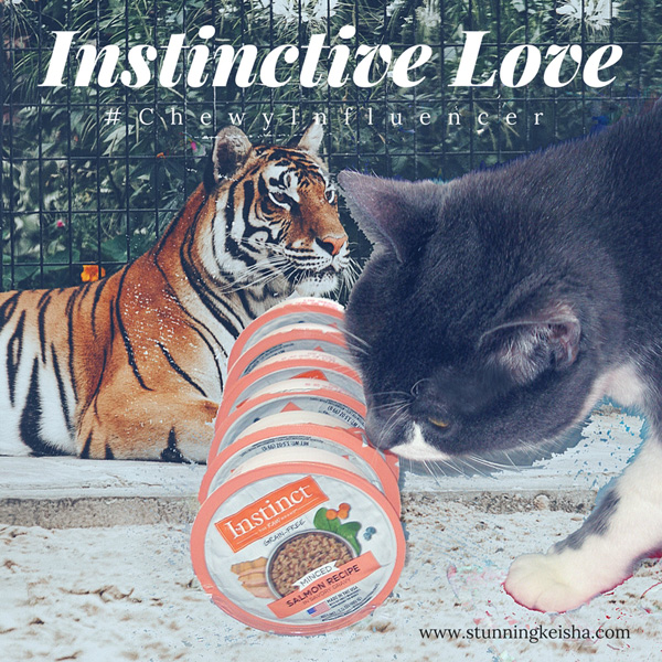 Instinctive Love #ChewyInfluencer