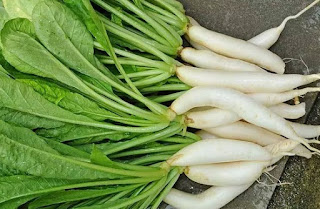 tumis lobak pedas, sup lobak putih, rasa lobak, resep sayur lobak santan, tumis lobak buncis olahan lobak ala korea, resep lobak goreng, jus lobak putih