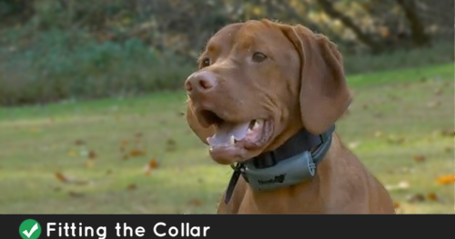 Incorporating A Vibrating Dog Collar In Your Dog Training