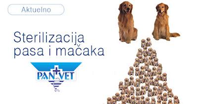 Sterilizacija pasa i mačaka Panvet veterinarska stanica Subotica