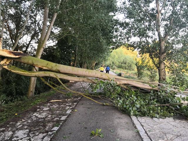 Γιάννενα: Έπεσαν δέντρα στον παραλίμνιο ποδηλατόδρομο,από το απογευματινό μπουρίνι