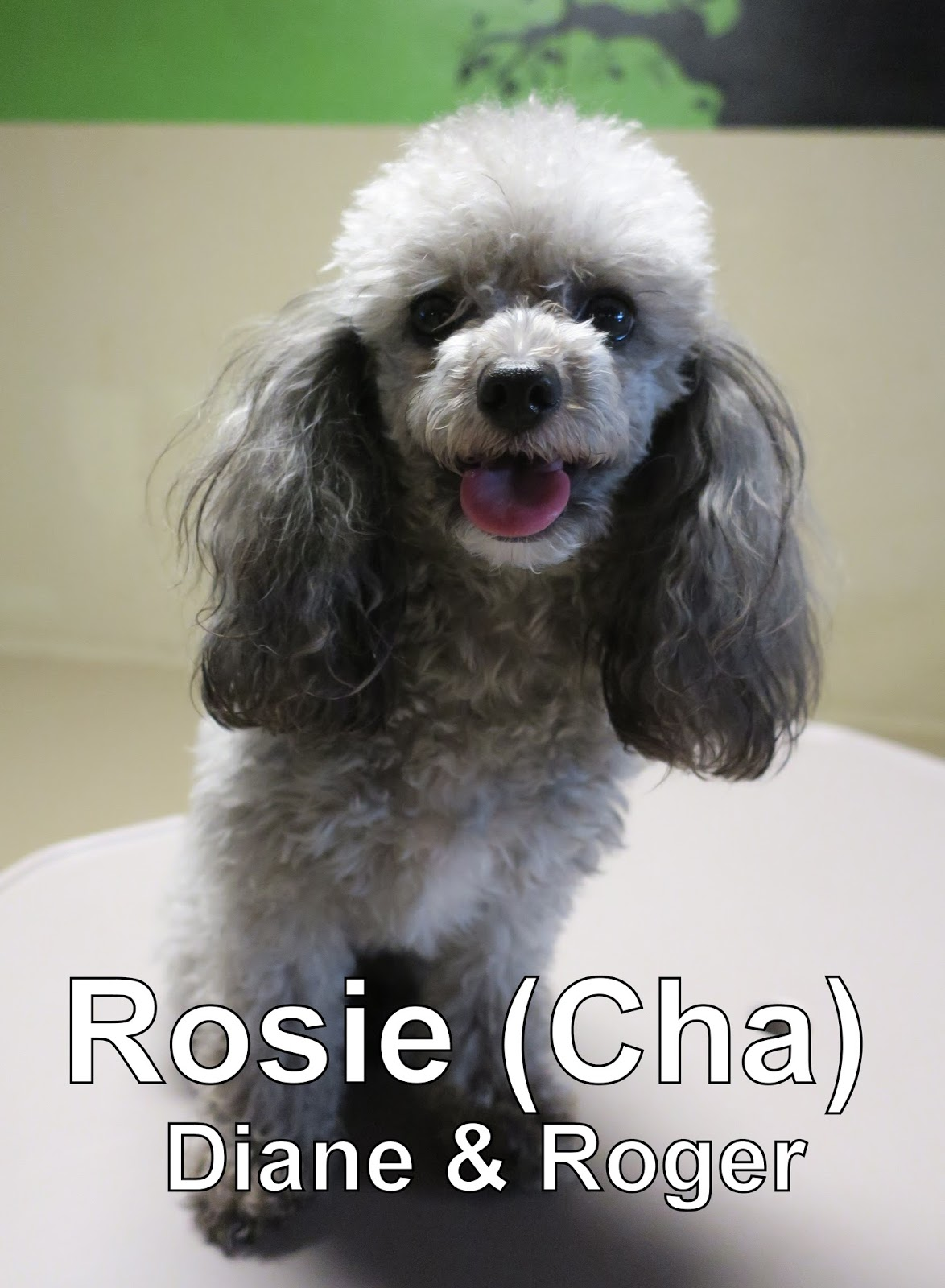 fort fido dog daycare boarding news blog rosie. Black Bedroom Furniture Sets. Home Design Ideas