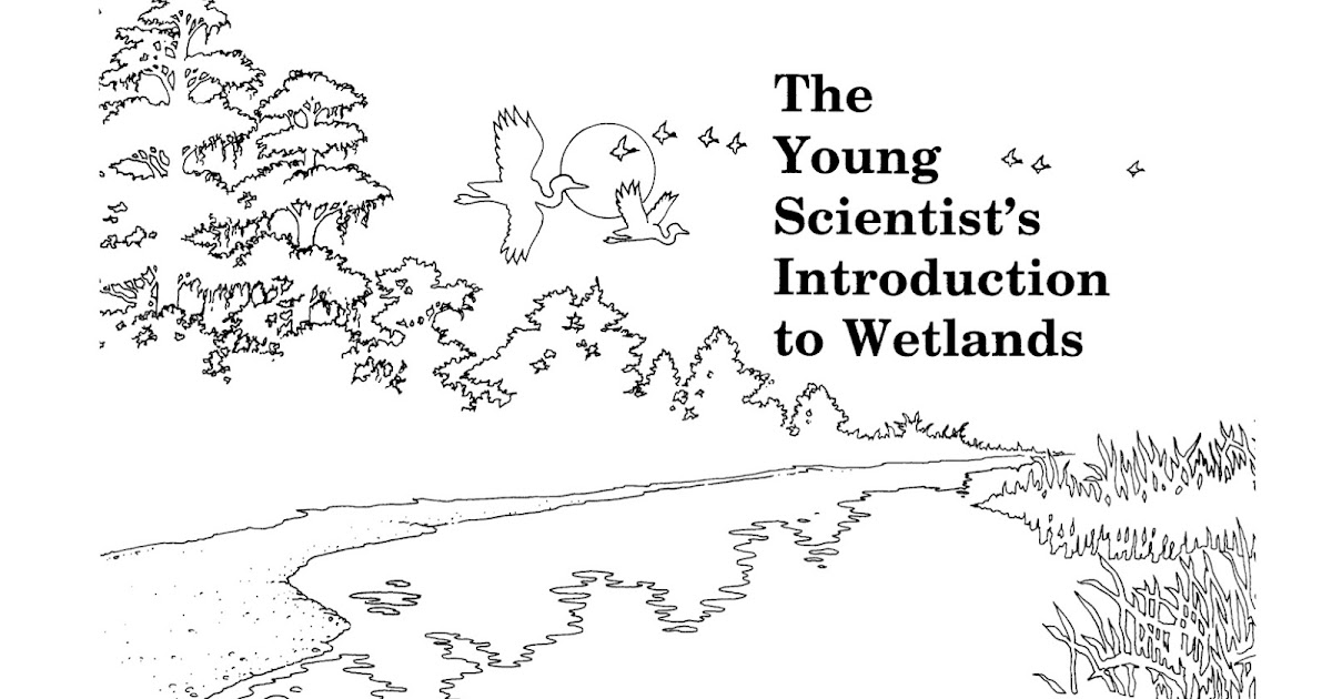 Critical Zone: Springfield Ohio: Wetlands and Education