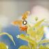 Video: Juego por mi Patria; Juegos Nacionales Hermanas Mirabal 2018