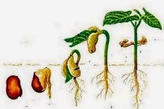 Gudang Tugas Herru07: Perkembangbiakan Tumbuhan dan Hewan