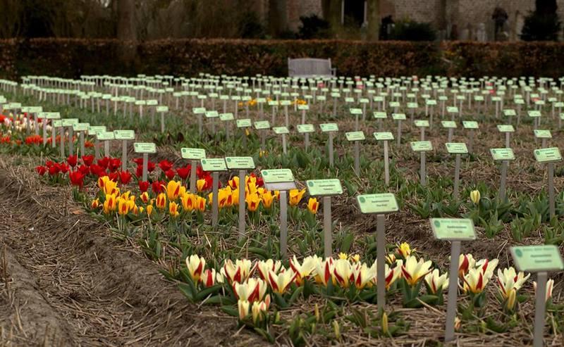 Hortus Bulborum. Jardín y museo de bulbos en los Países Bajos
