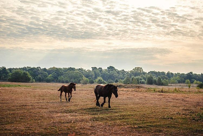 http://erikwitsoephotographer.tumblr.com/post/128021080566/greetings-went-for-an-early-walk-and-this-mother
