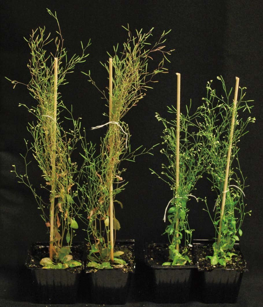 Animals' mitochondria defenses discovered in plants - The ...