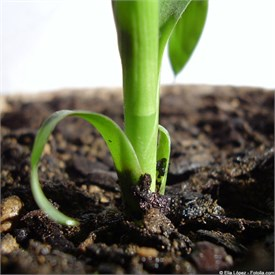 La nutrition des plantes