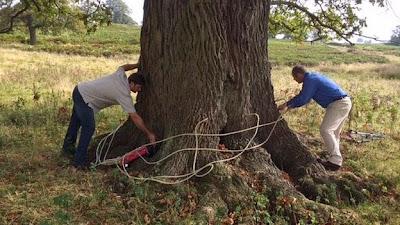Ενέσεις με σκόρδο για άρρωστα δέντρα