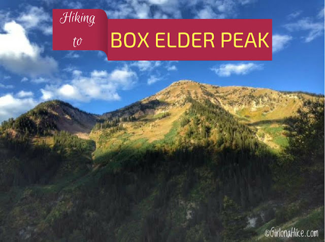 Hiking to Box Elder Peak, Utah, Hiking in Utah, Hiking in Utah with Dogs