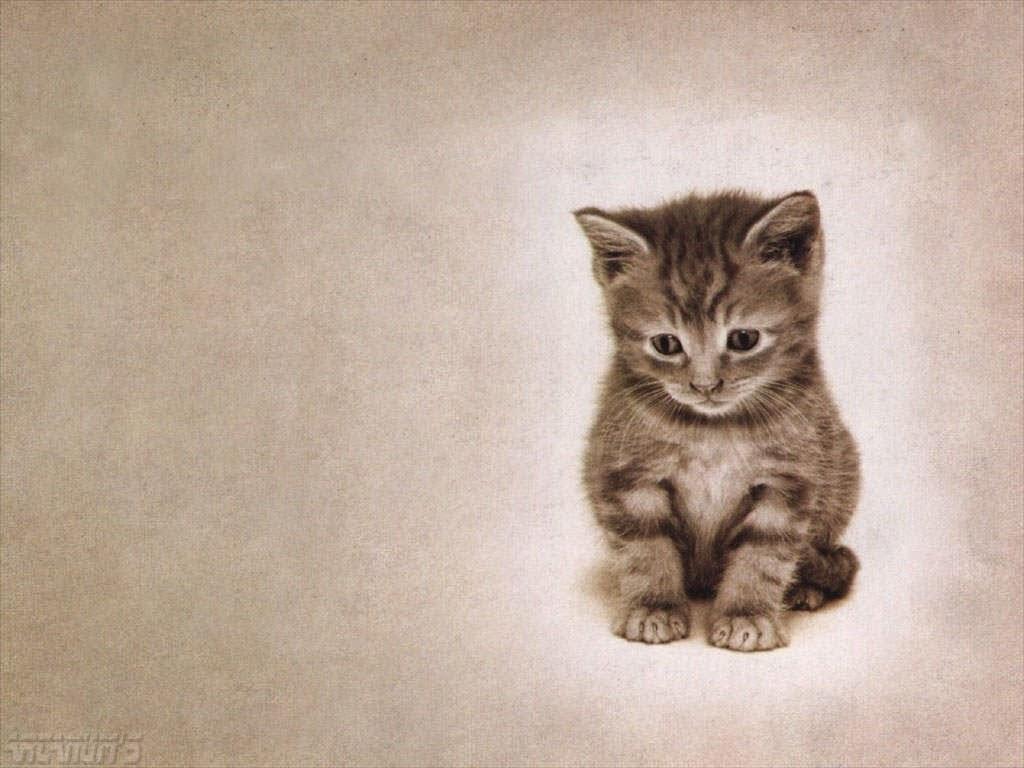 المجموعه الثالثه من صور الحيوانات بجوده عاليه Animal Wallpapers