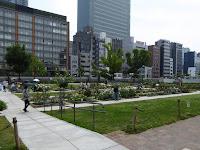【大阪市北区】中之島公園のバラ園