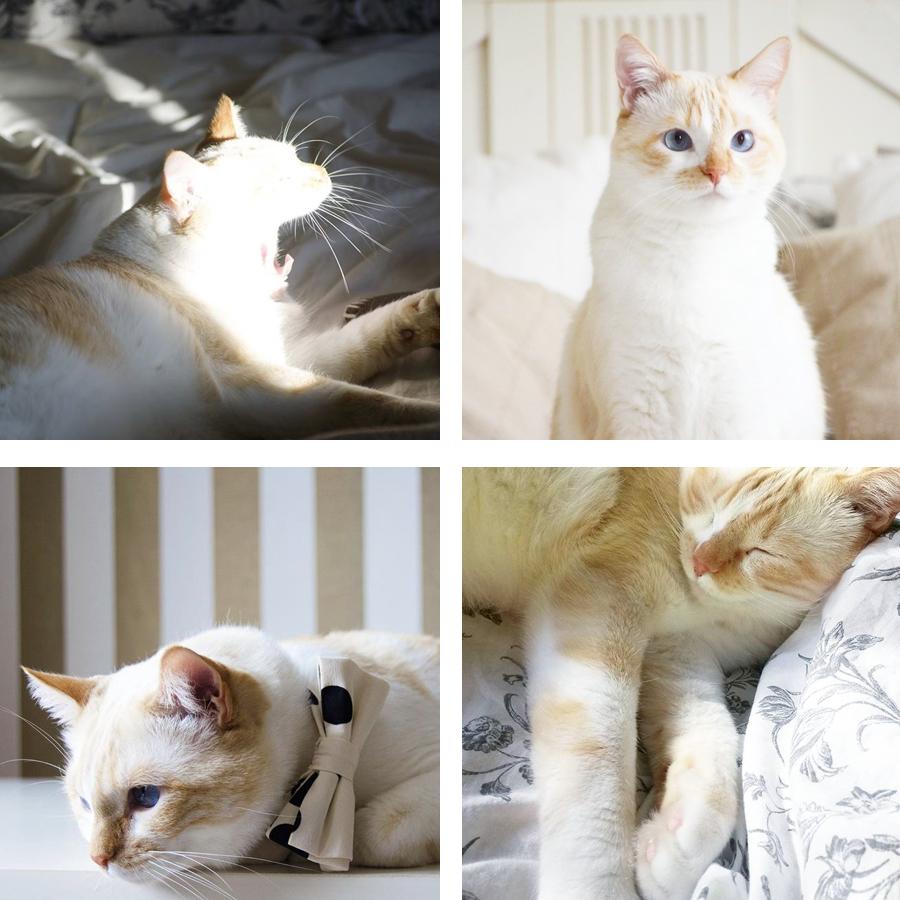 Nuestro gato Misho