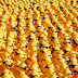 ALERT: Waiver process introduced for duck races