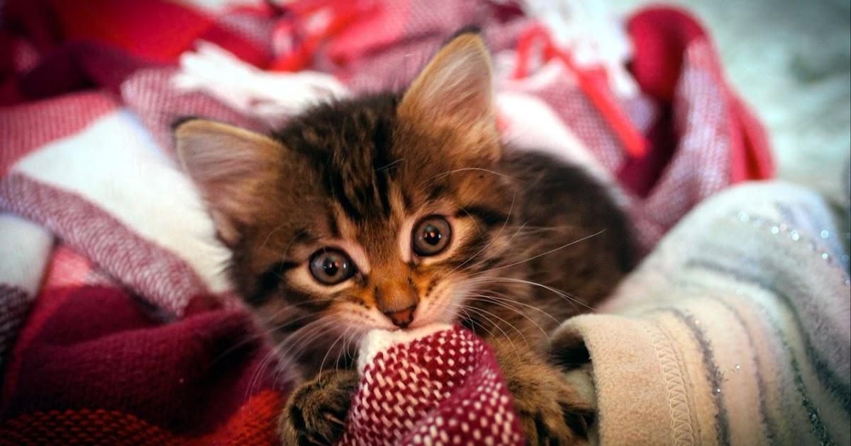 Все о братьях наших меньших: Опять подкинули нам котёнка ...